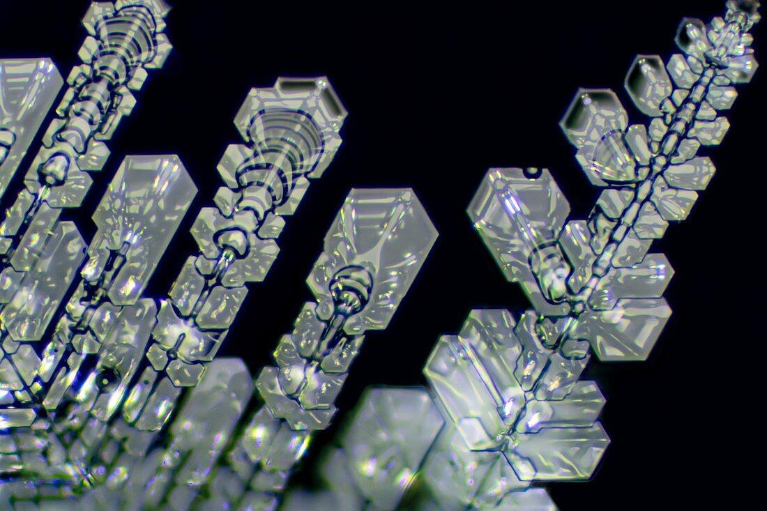 Ice crystals, light micrograph