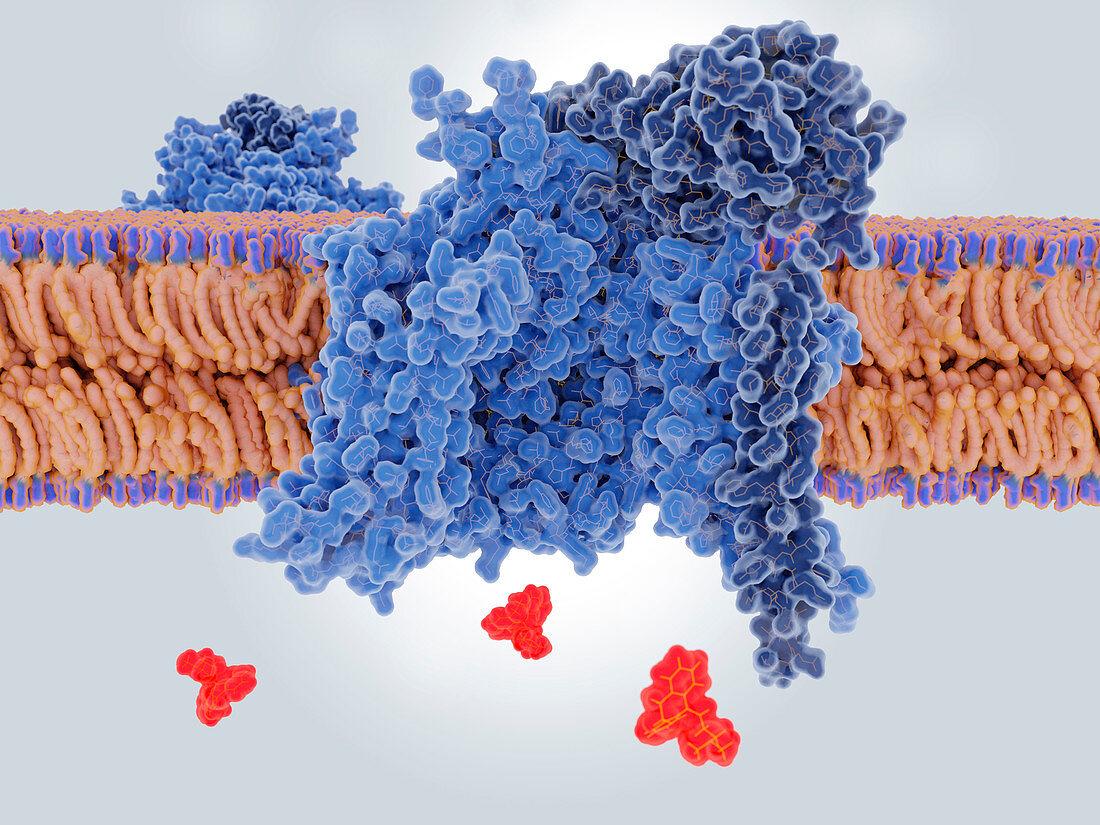 Amitriptyline drug blocking a sodium channel,illustration