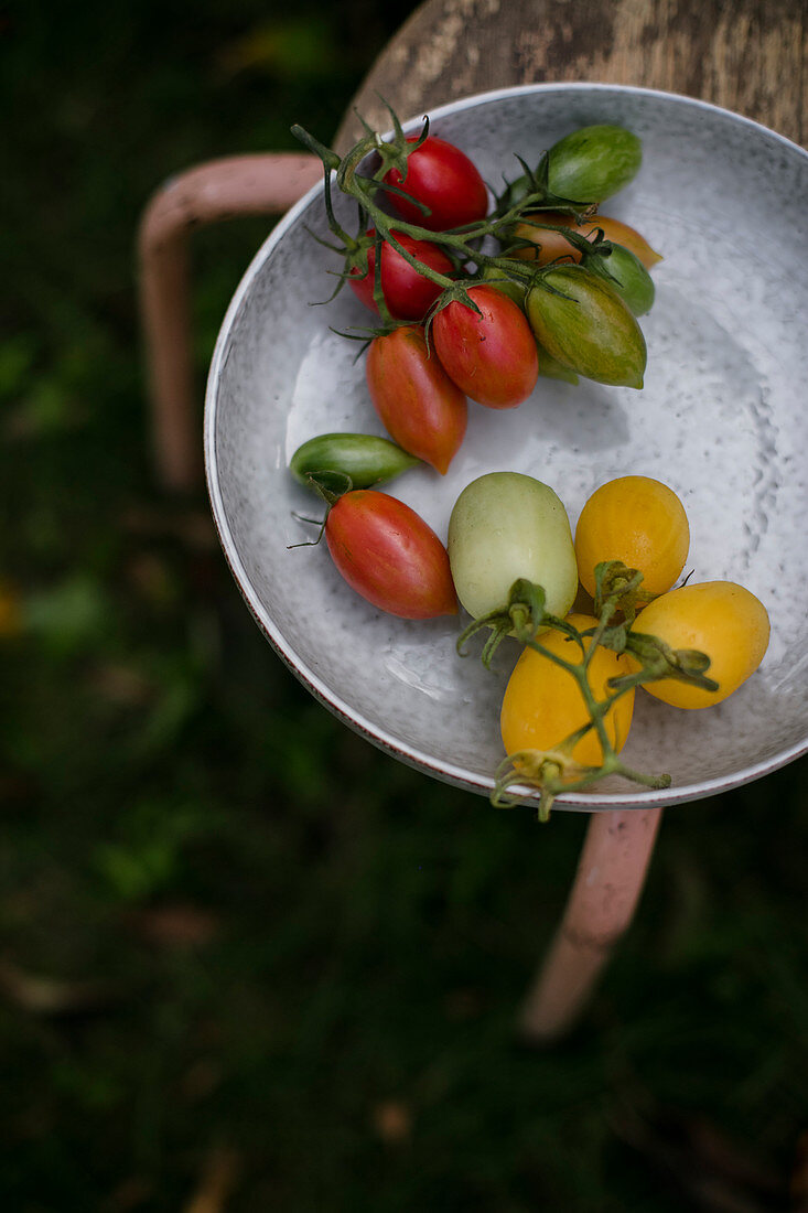 Red and green tomatoes in a ceramic plate outdoor, in the garden