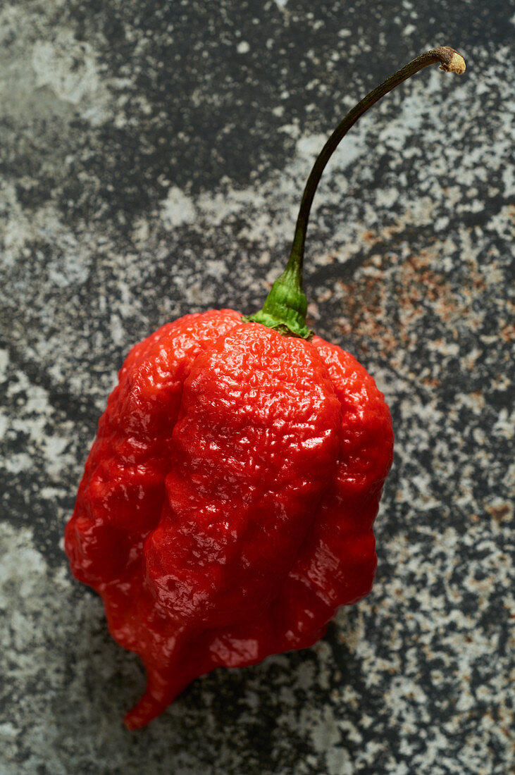 Eine rote Carolina Reaper Chili