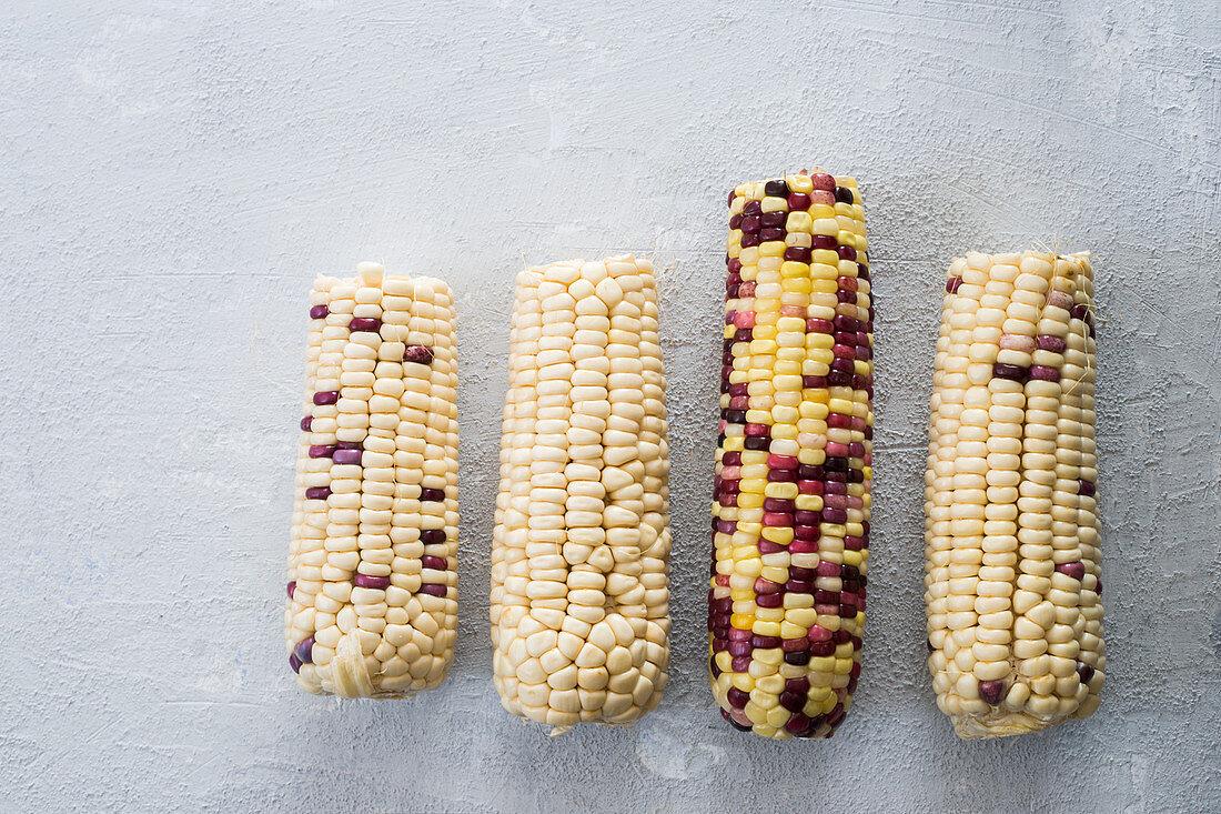 Various fresh corncobs