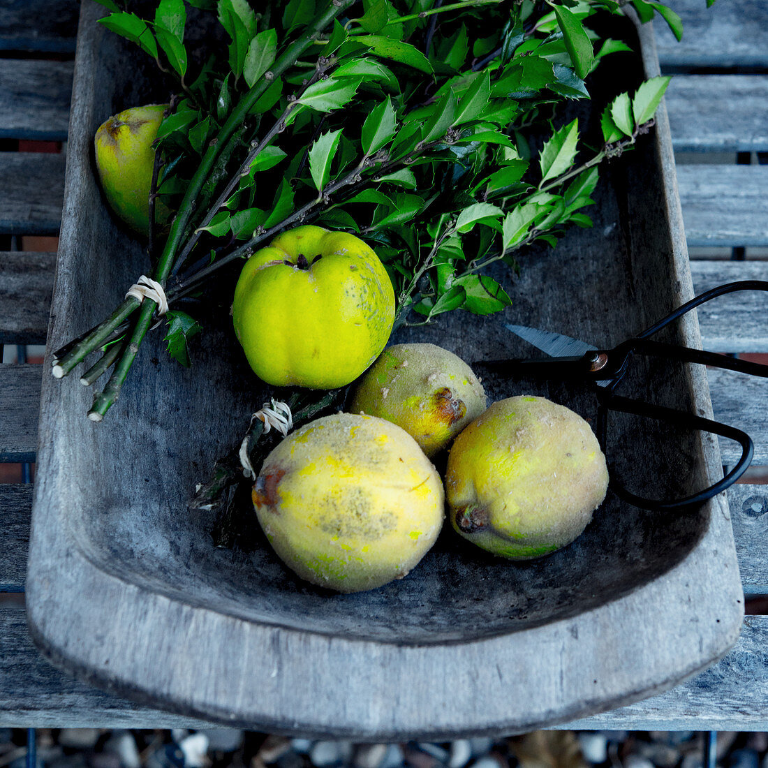 Fresh quinces in a wooden bowl