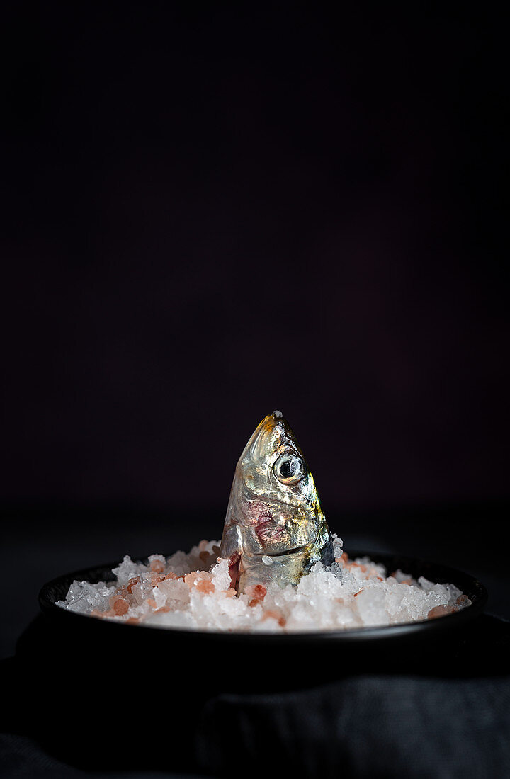 Sardinenkopf in Salzhaufen auf Teller
