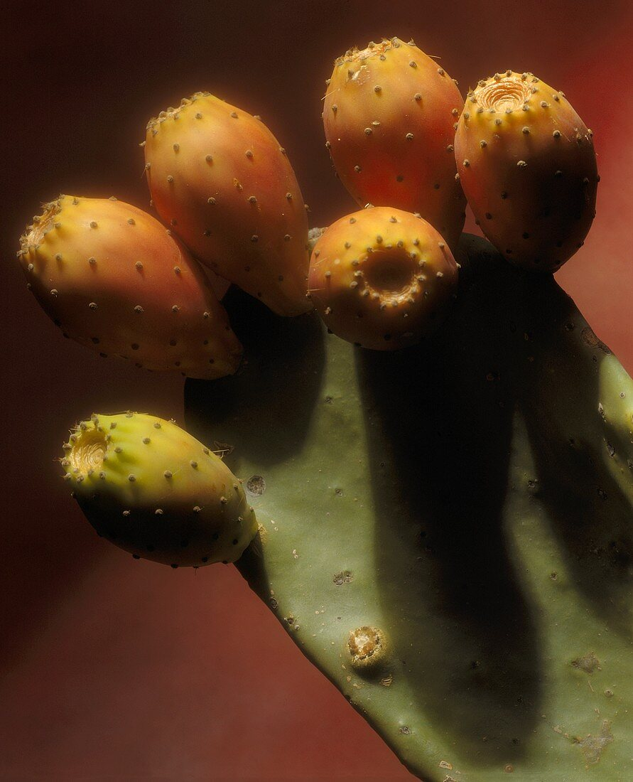 Cactus figs on the plant