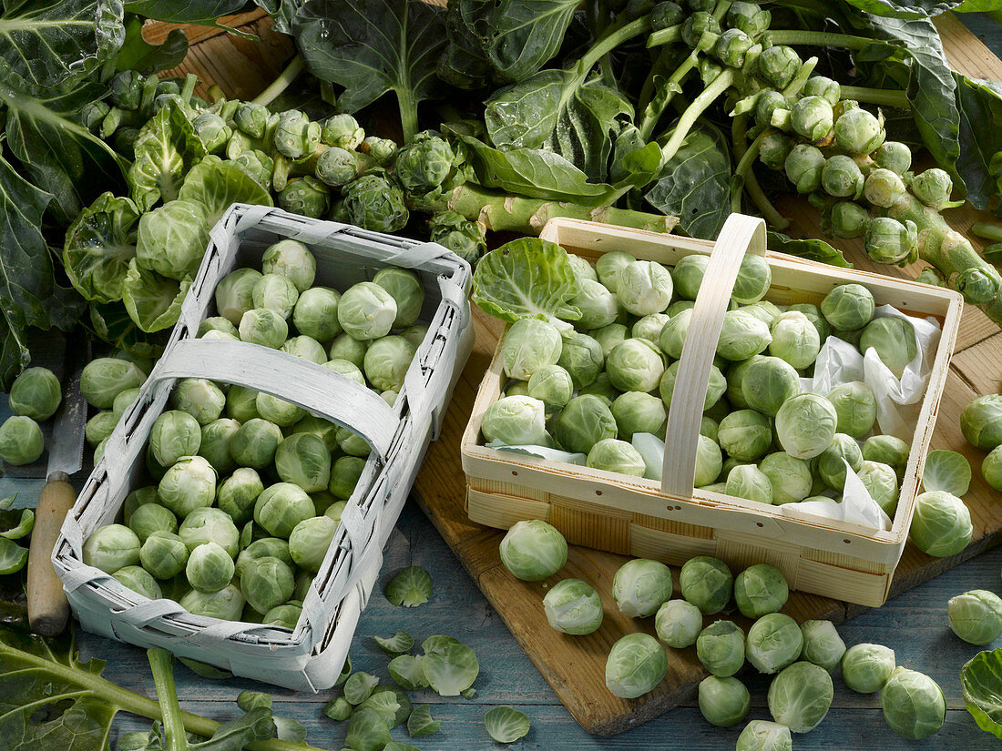 Freshly harvested Brussels sprouts