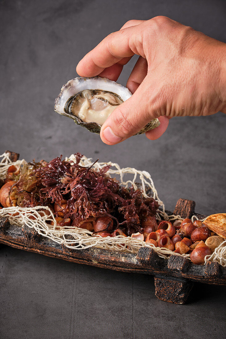 Hands holding palatable oyster in shell served in plate with various seafood ingredients