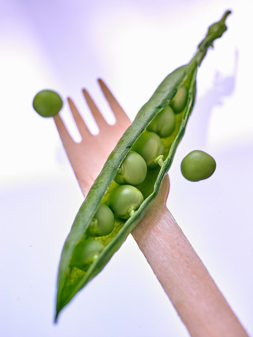 Opened pea pod on a wooden fork (close-up)