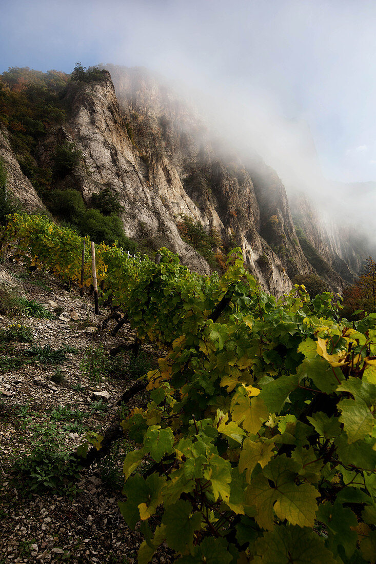 A vineyard landscape, Gut Hermannsberg, near Niederhausen, Germany