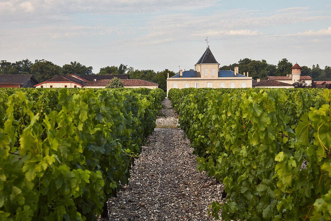 Vines, Chateau Brane-Cantenac, Margaux-Cantenac, Bordeaux, France