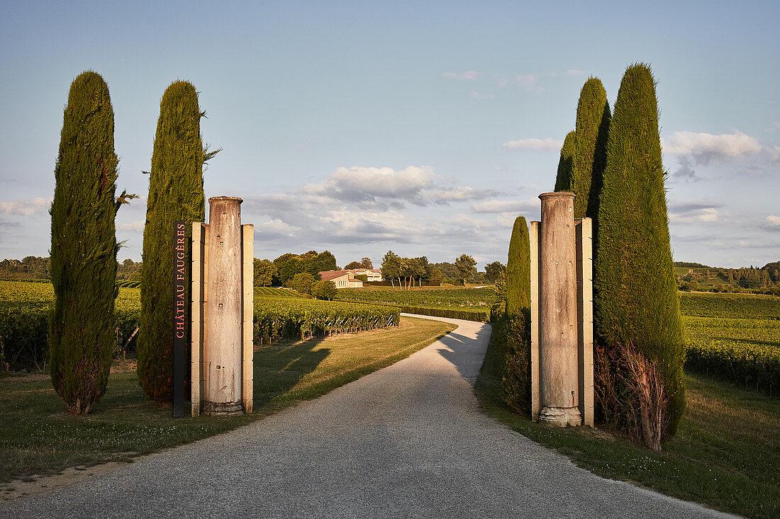 Weinlandschaft, Château Faugeres, Saint Emilion,  Bordeaux, Frankreich