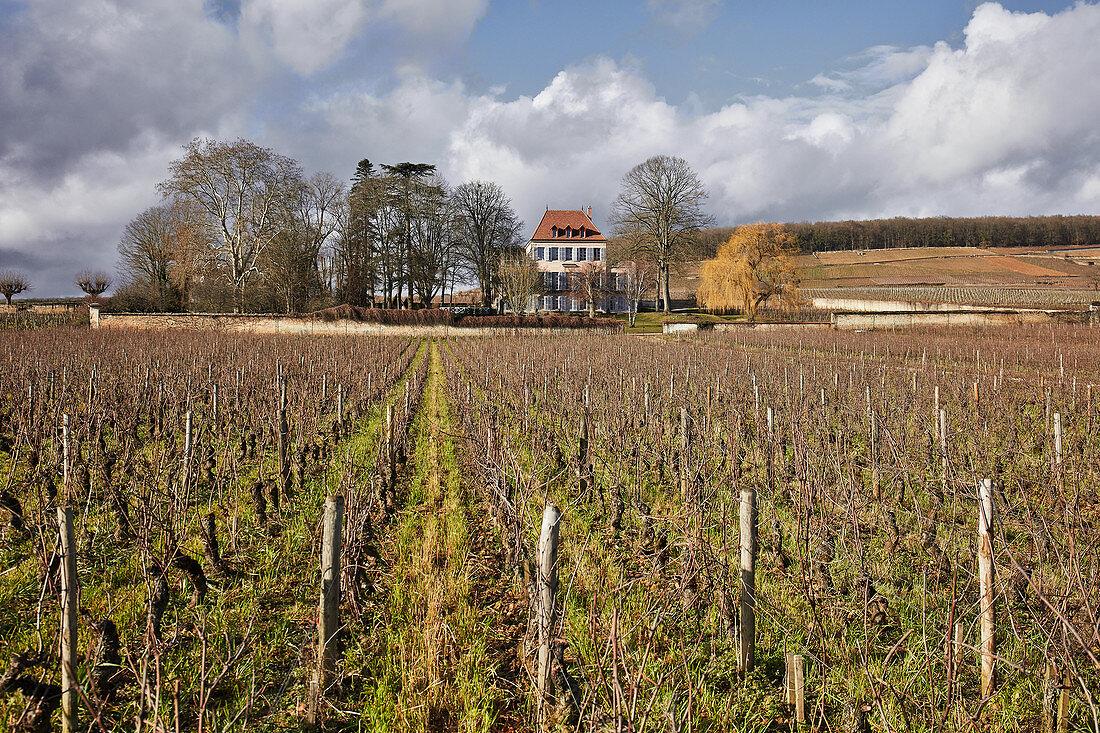 Viney, Maison Louis Latour, Burgundy, France