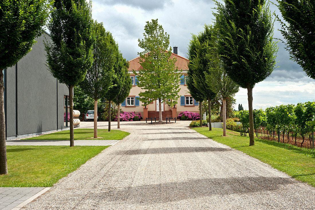 Hofeinfahrt, Weingut Markus Schneider, Pfalz, Deutschland