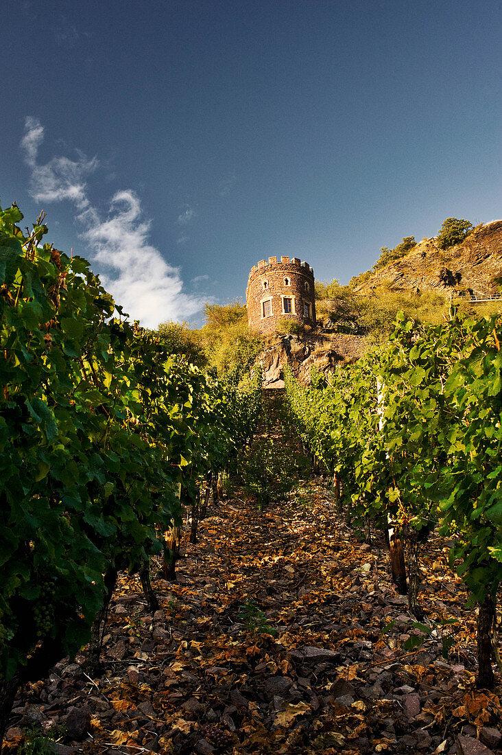 A vineyard landscape with a tower, near Hermann Dönnhoff vineyard, Rhineland Palatinate, Germany