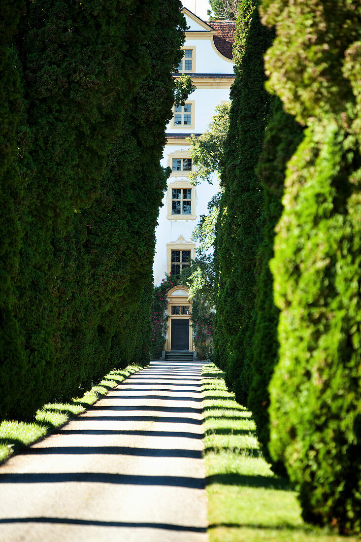 Cypress alley, Salem Palace, Württemberg, Germany