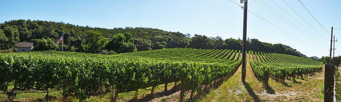 A vineyard landscape, Silverado Trail, Napa Valley, California, USA