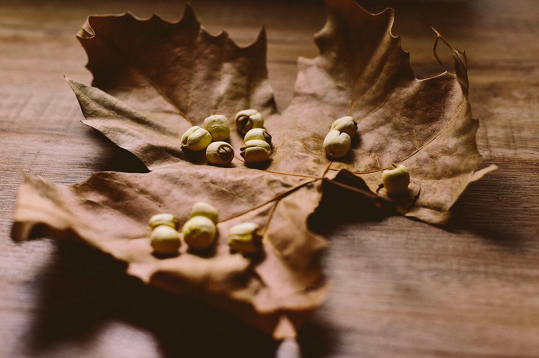 Dried lotus seeds placed on plane tree leaf