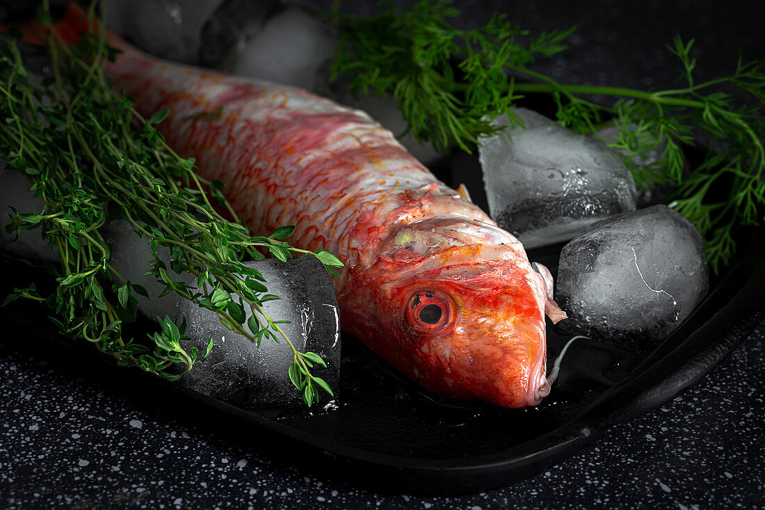 Raw Mullus fish with herbs and ice cubes