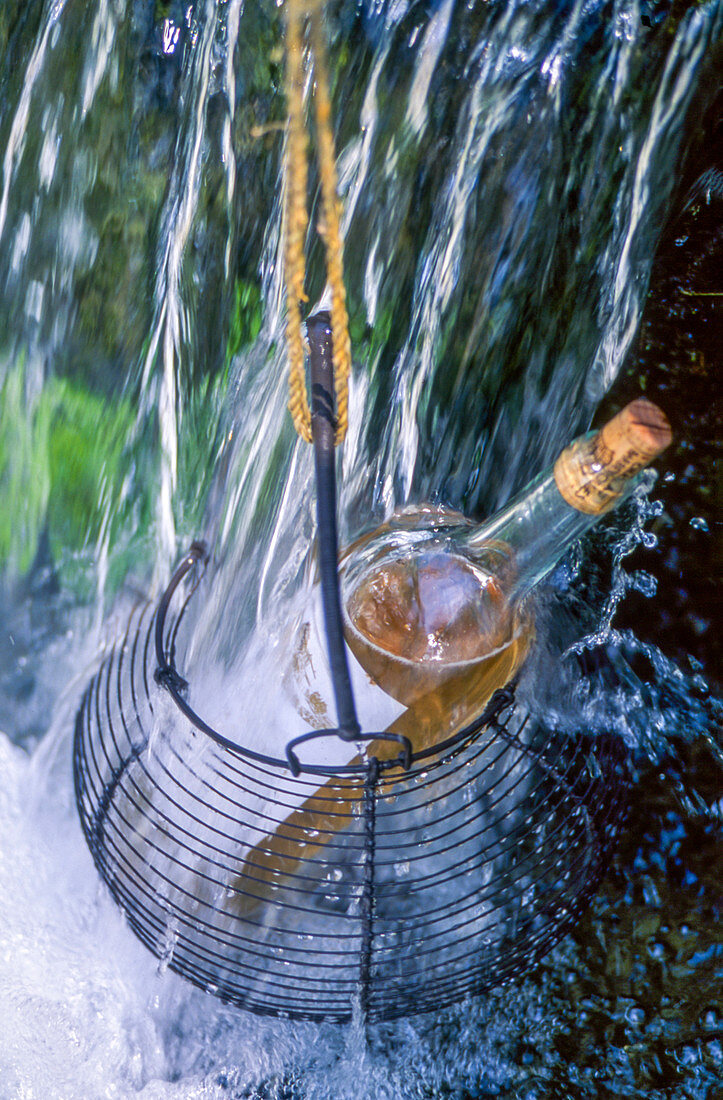 A bottle of rose wine in a wire basket hanging in a waterfall
