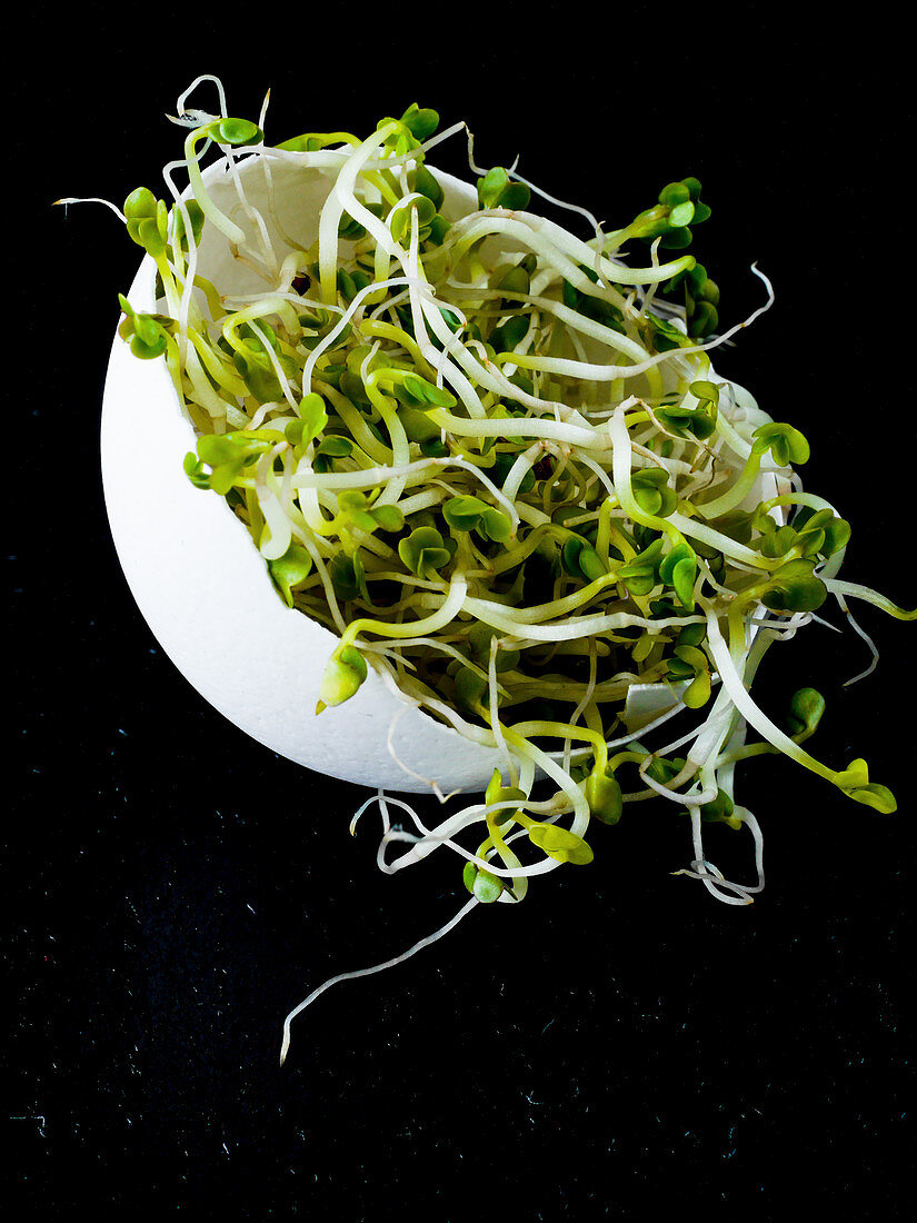 An egg shell filled with cress