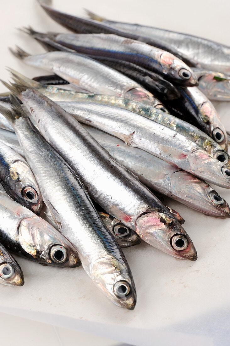 Raw anchovies