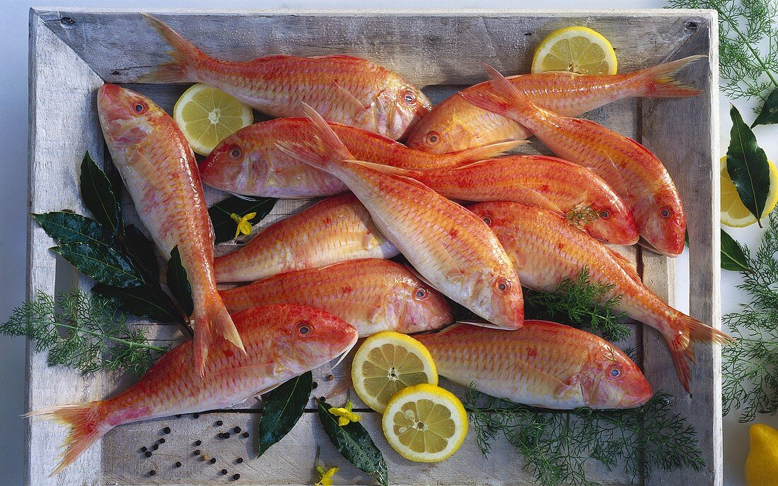 Several red mullet with dill, lemon, bay leaf, pepper
