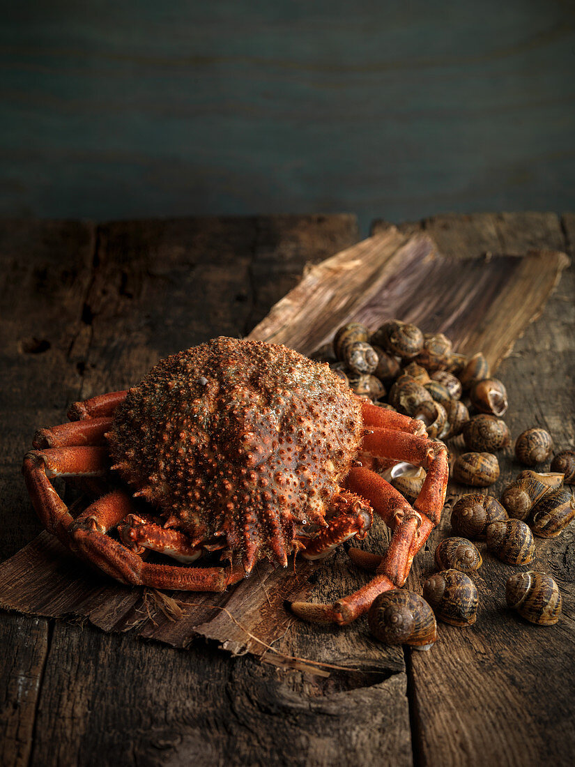Spider crabs and snails