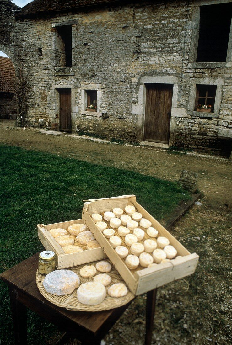 Crates with various blue cheeses in a yard
