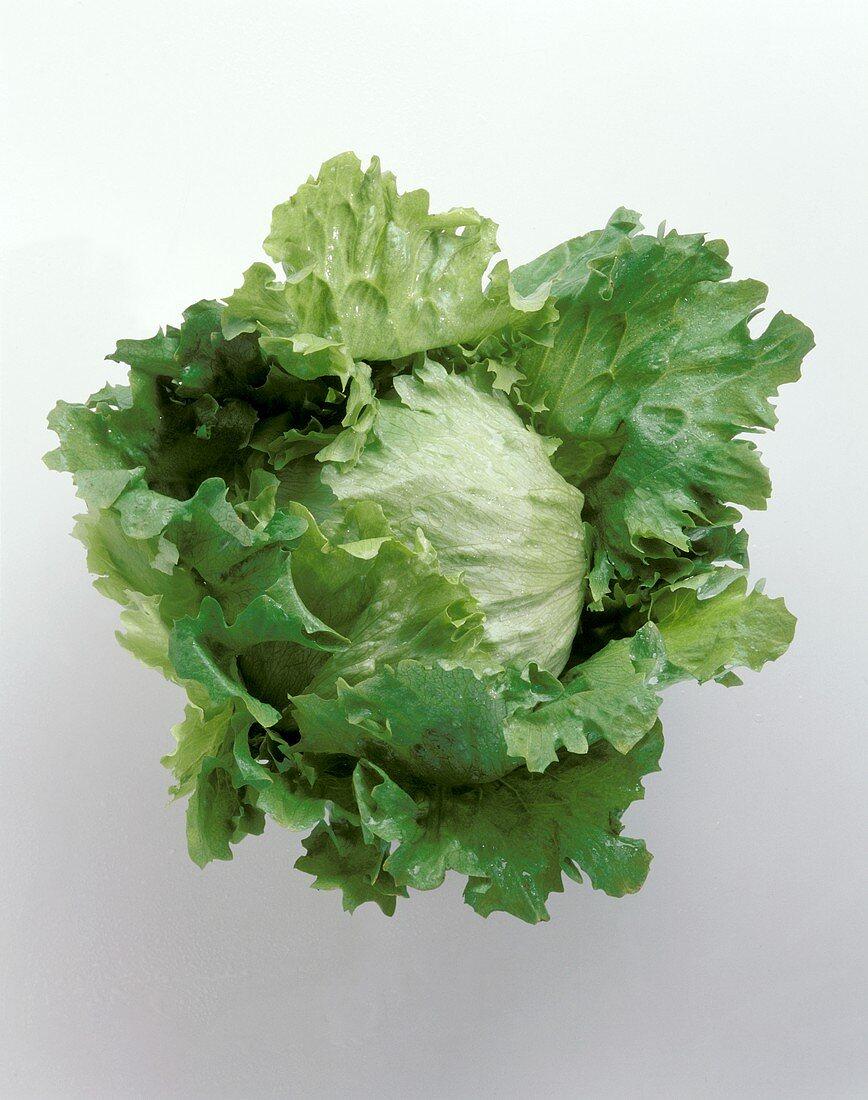 Head of Iceburg Lettuce