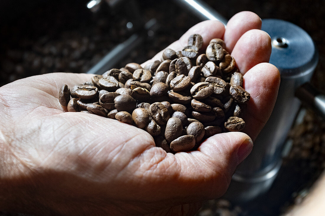 A hand holding roasted coffee beans