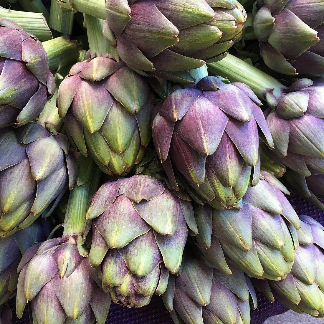 Purple Italian artichokes