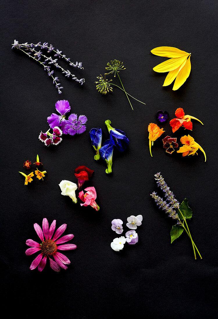 Edible flowers - lavender, dill flower, sunflower petals, dianthus, butterfly pea, nasturtium, gem marigold, snap dragon, anise hyssop, echinacea, pansy