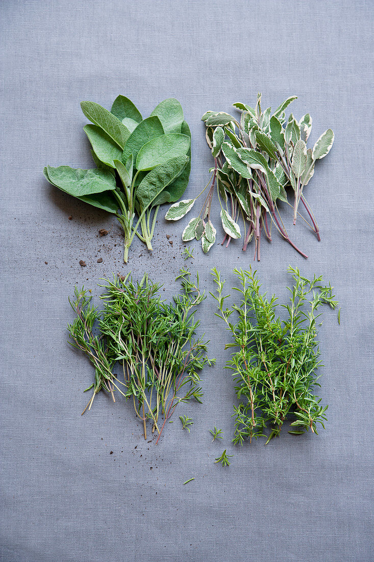 Sage, modified sage, winter savory and summer savory
