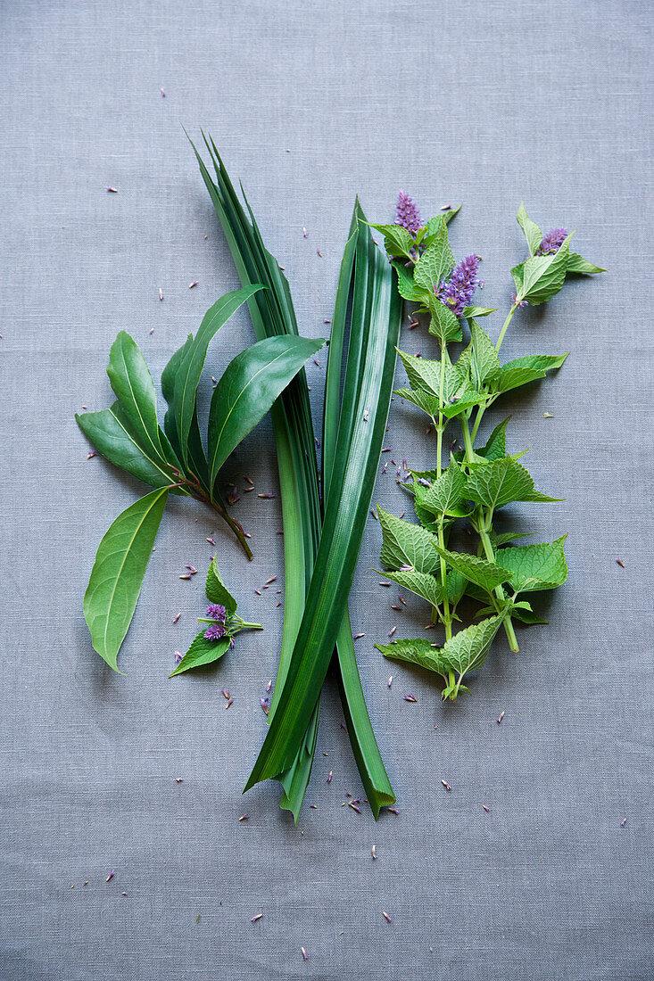 Laurel, pandan leaf and aniseed herb