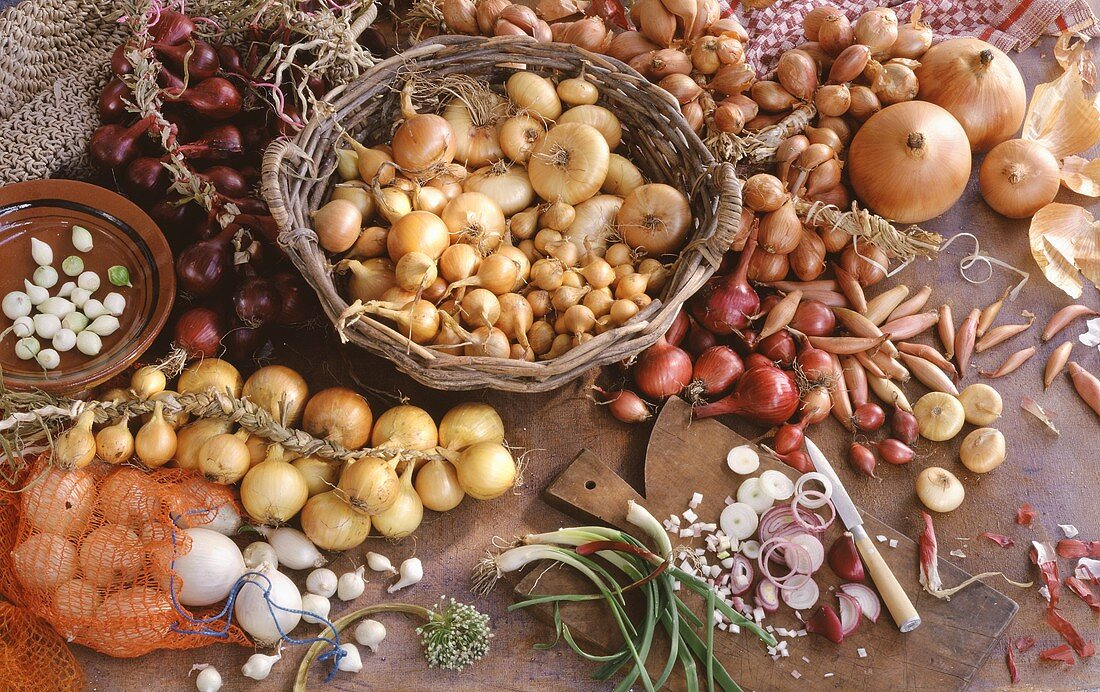 Several Types of Bulb Vegetables