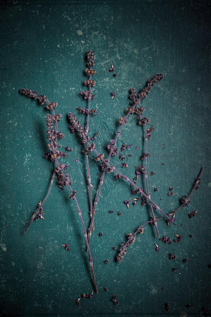 Zalotti-Blüten (afrikanische Basilikumpflanze)