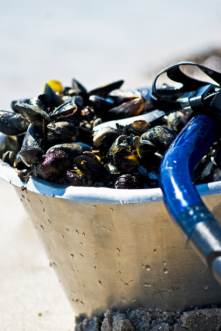 A bucket of fresh mussels
