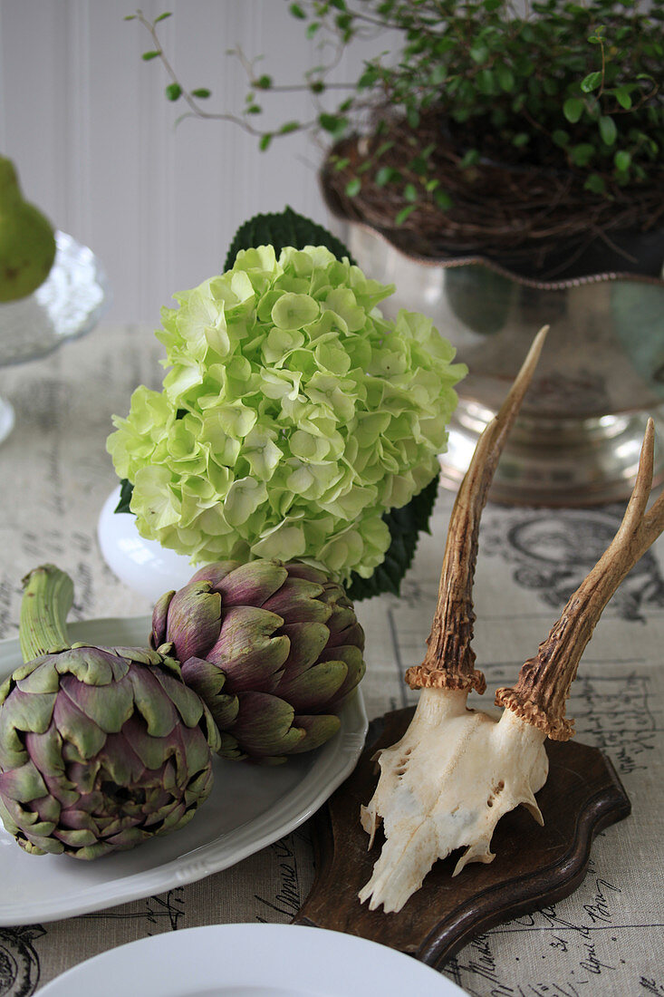 Still life with artichokes, hydrangea flowers, and antlers