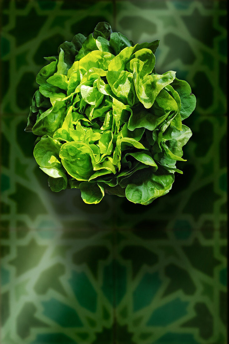 Green lettuce (seen from above)