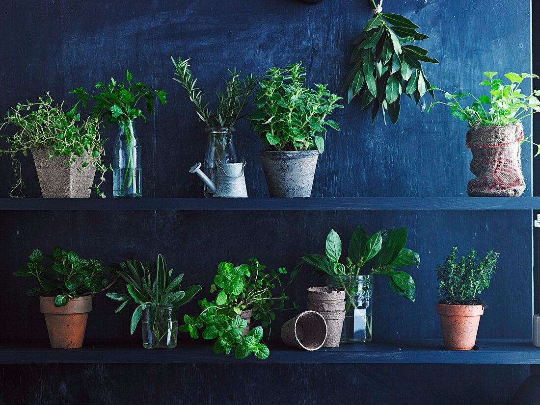 Oregano, rosemary, sage, berry and cream mint, lemon thyme, flat-leaf parsley