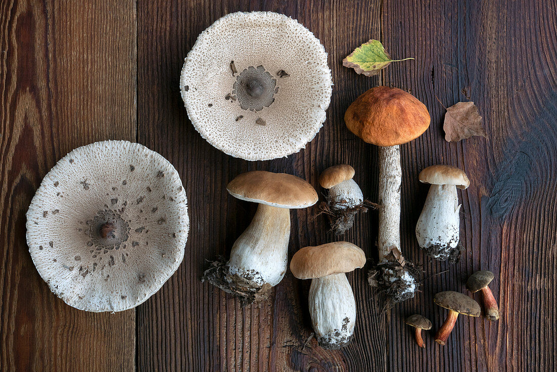 Still life with fresh boletus mushrooms on a wooden background