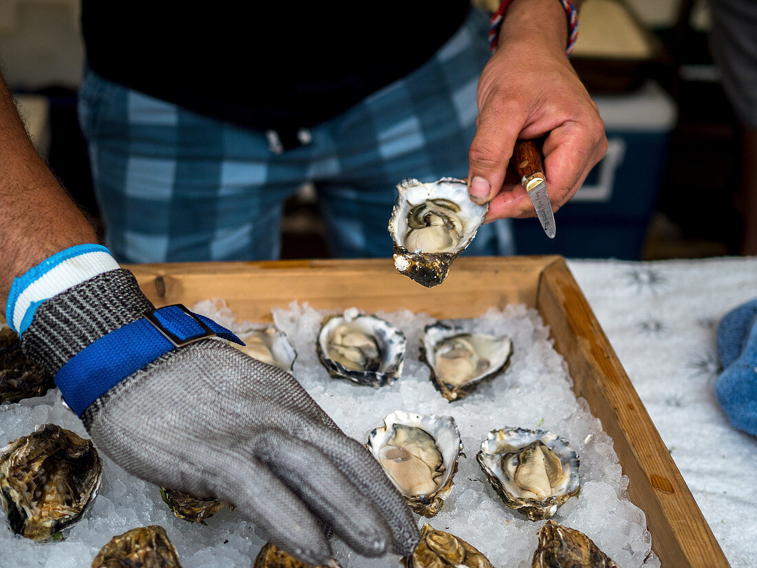 Freshly opened oysters on ice