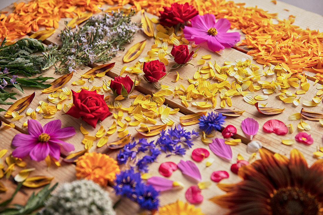 Fragrant flower buds and delicate petals arranged on rustic wooden table