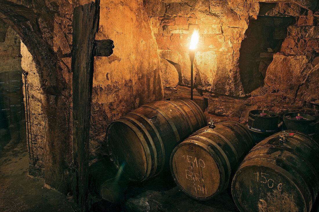 Wooden barrels in a traditional beer cellar