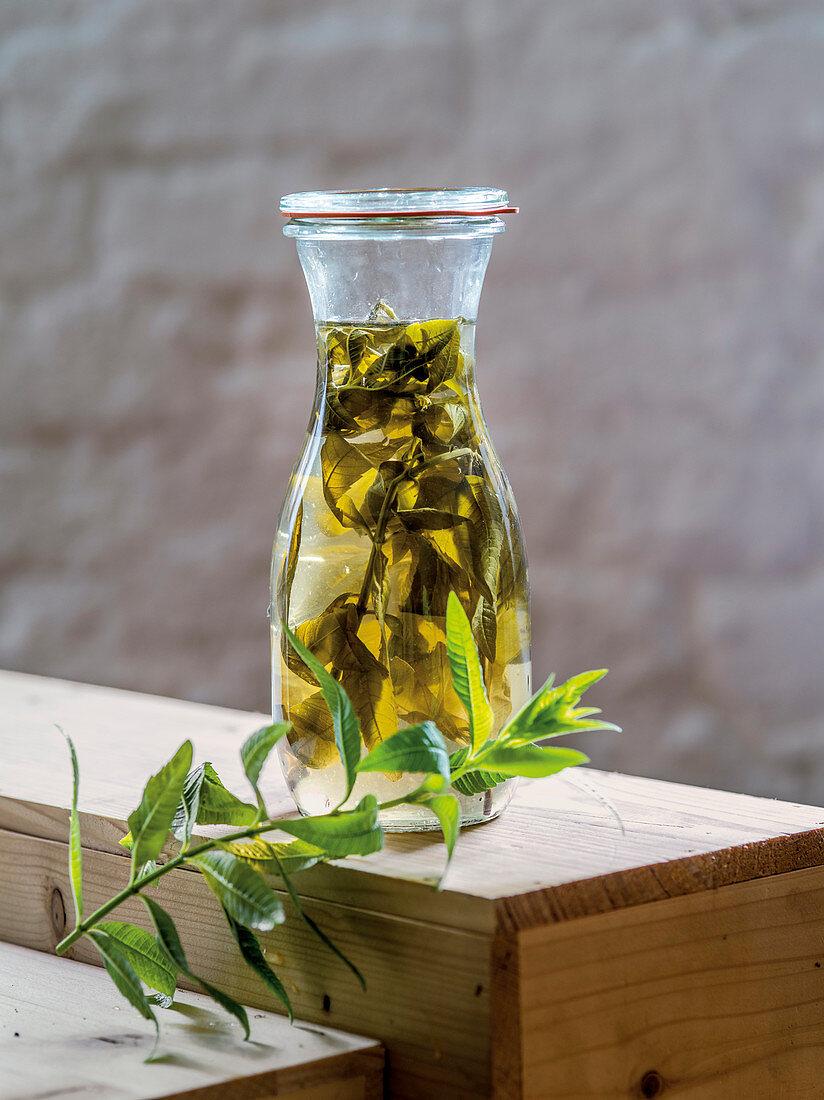 Verbena extract