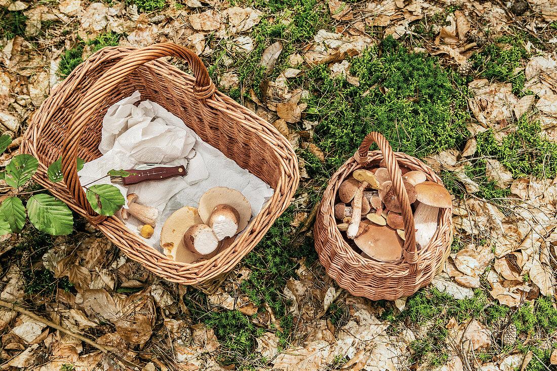 A basket of freshly picked mushrooms