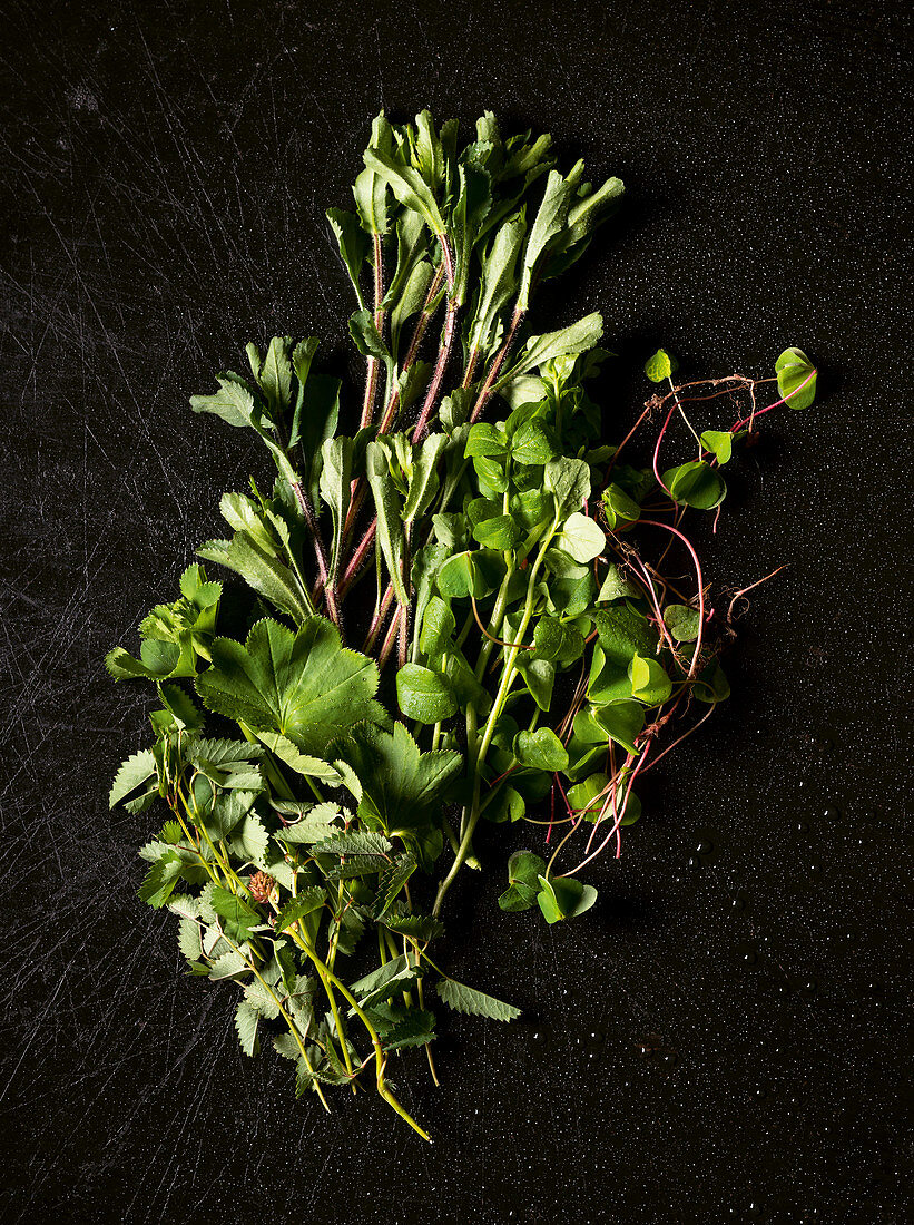 Pimpinelle, lady's mantle, daisy, wild watercress