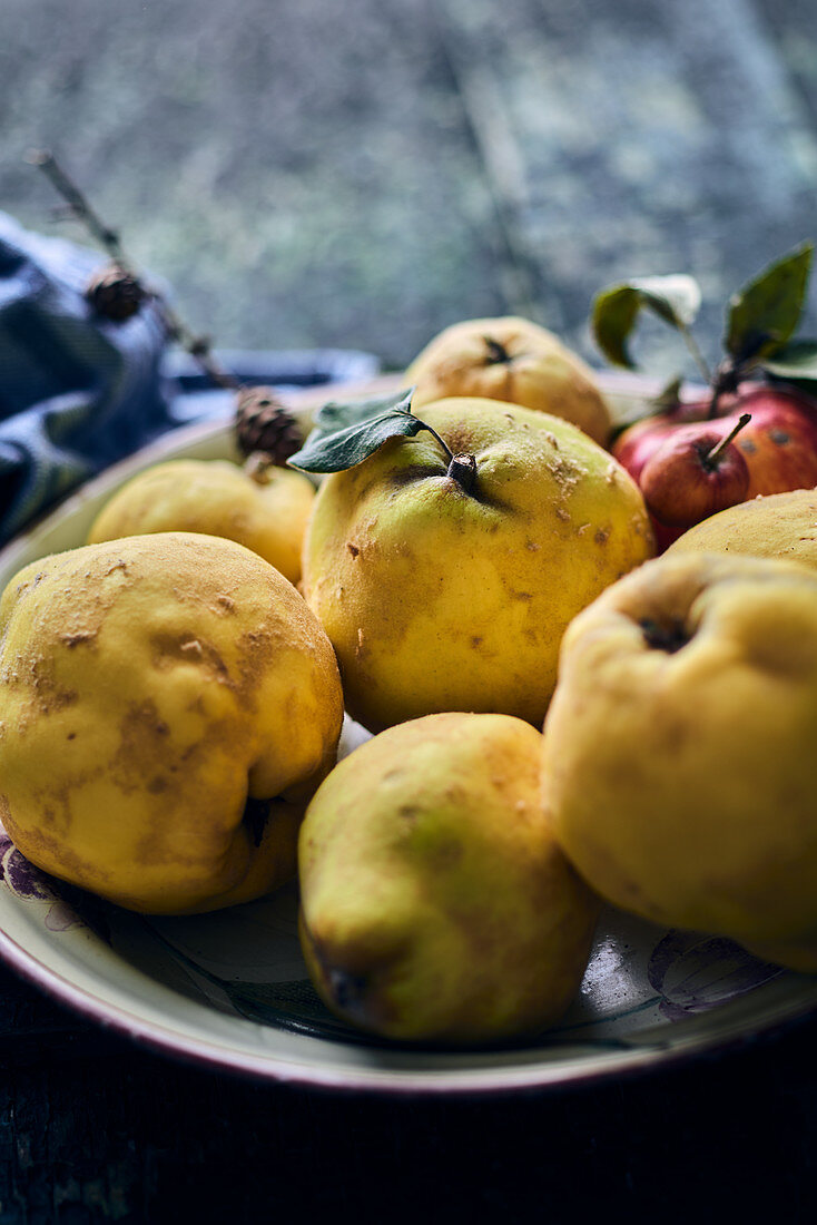 Fresh quinces and apples in an enamel plate
