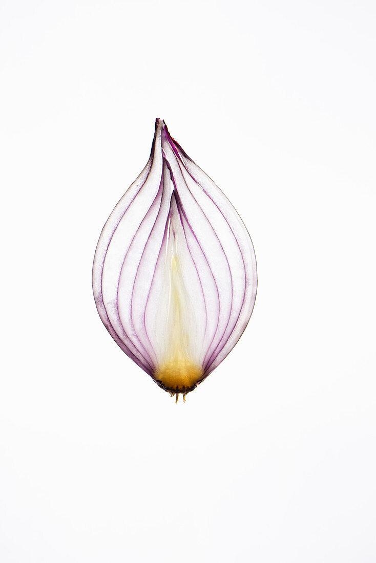 Translucent onion slice