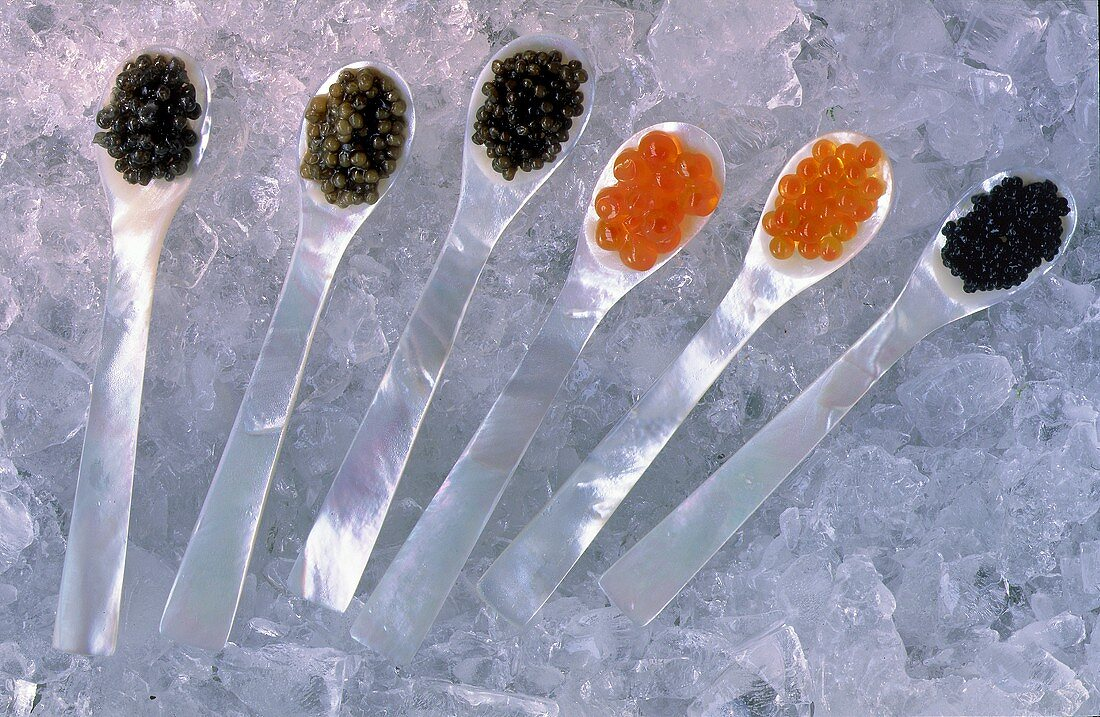 Many Assorted Types of Caviar on Spoons