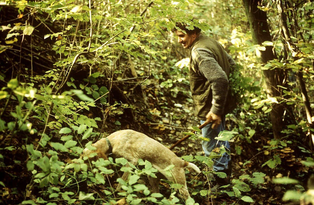 Truffle-hunting with dogs in forest near Alba (Piedmont)